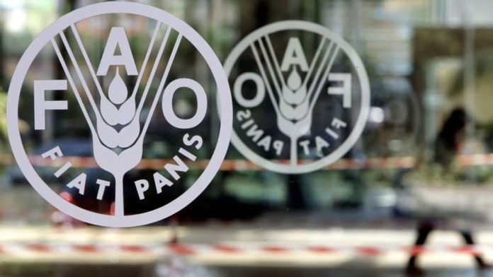 FAO canvasses improved rural economy to curb migration 1