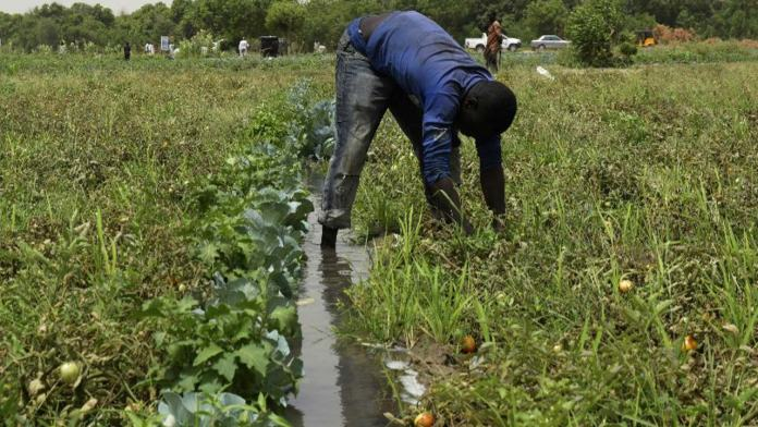Total, NNPC train 21 farmers on sustainable agribusinesses 1