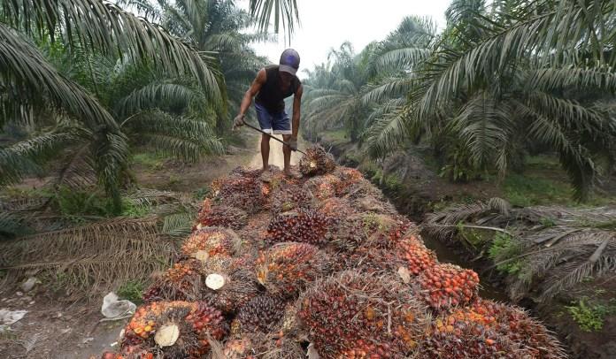Okitipupa Oil Palm workers end strike 1