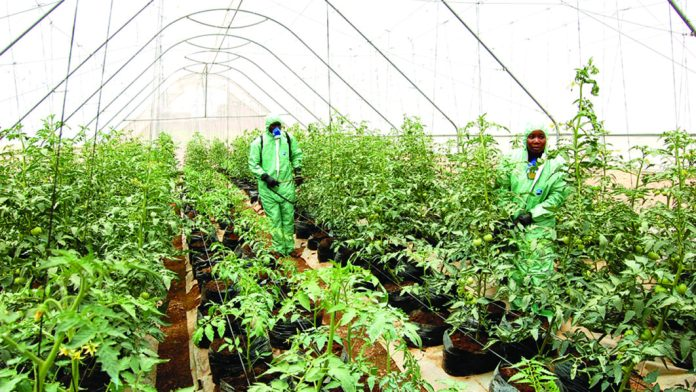 At Dizengoff's open day, experts advocate Greenhouse for food sufficiency 1