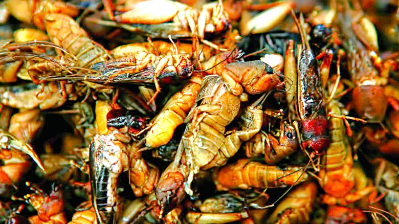 How eating insects reduces risk of chronic diseases | The Guardian Nigeria  News - Nigeria and World News — Features — The Guardian Nigeria News –  Nigeria and World News