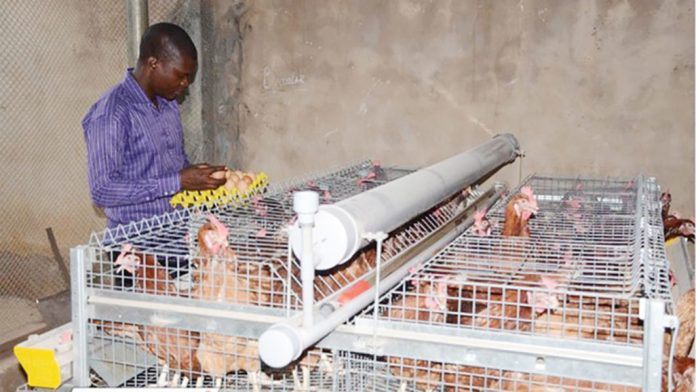 Gartech launches eco-pro caging system for backyard poultry farming 1