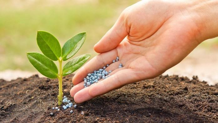 'FG to restrict importation of NPK fertiliser' 1