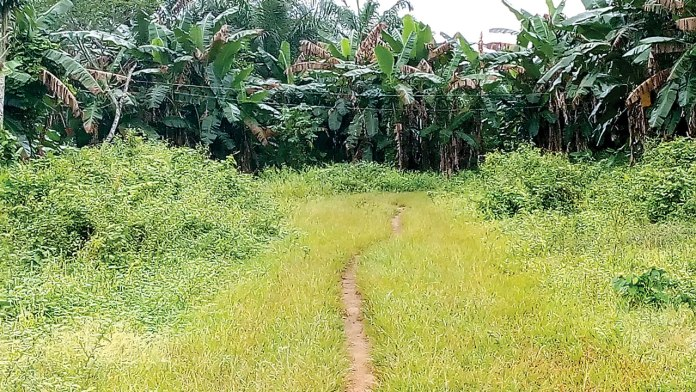 Farmland cleared for superhighway