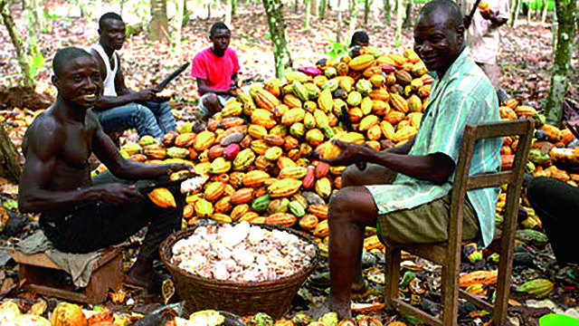 Cocoa 640x360 - Board releases 2019/20 land allocation for cocoa farming in Cross River