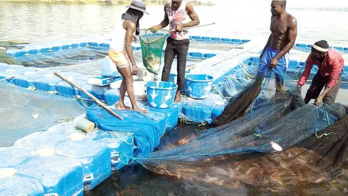TADAN, triton seek ban on importation of Tilapia | 1