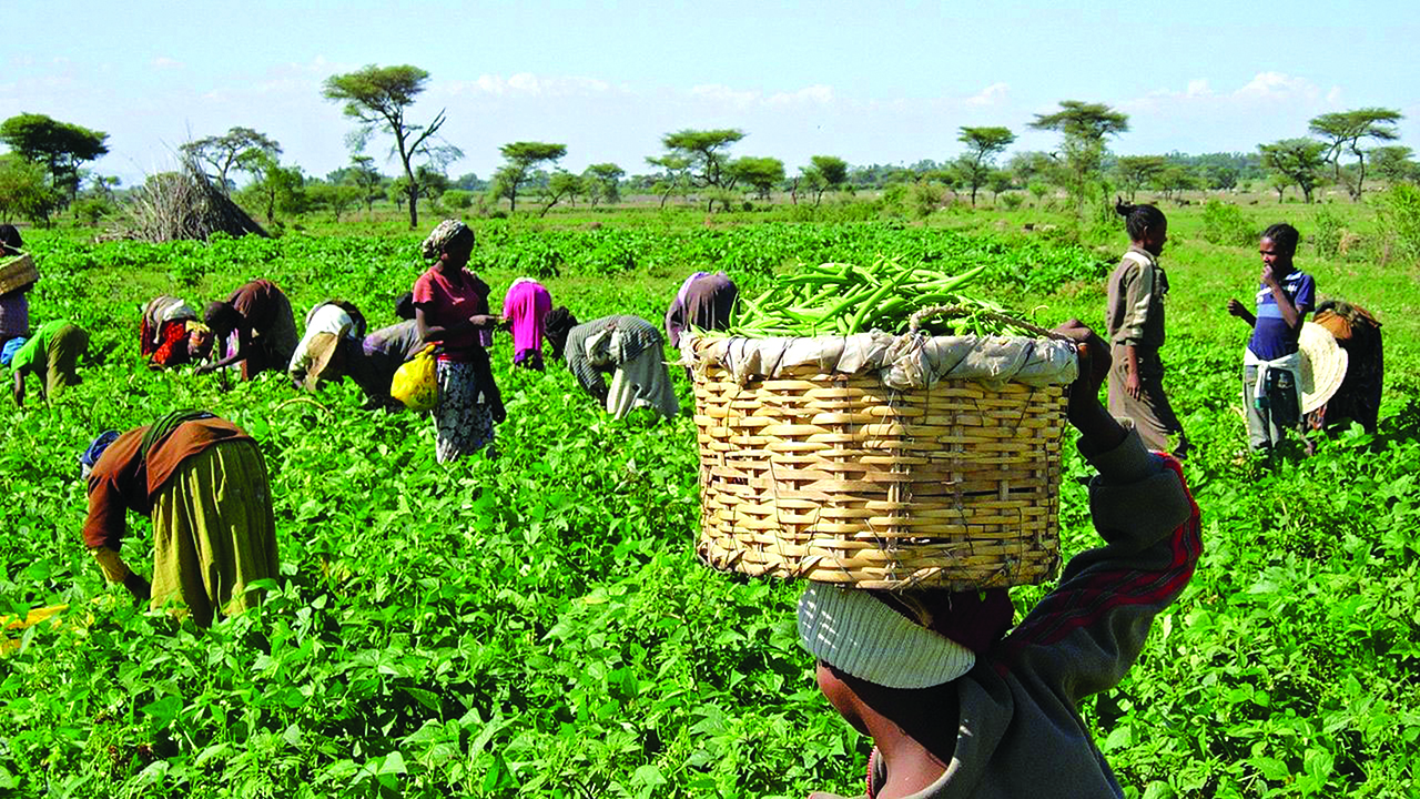 Ngo Seeks Improved Budgetary Provision For Agriculture In Kwara