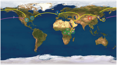 HSV1 genome phylogenetics used to track past human migrations