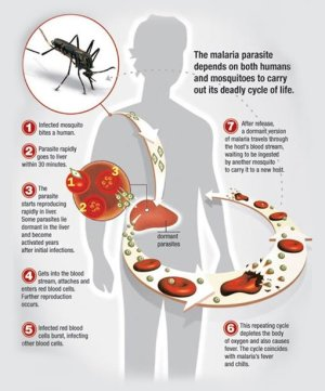 Malaria in the US: Symptoms and Prevention – Guardian