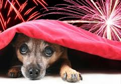 Dogs are scared of  fireworks