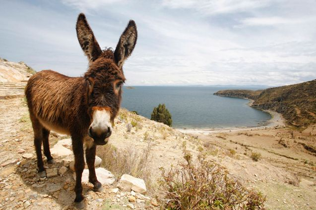 Attention Walmart Shoppers: Red Tag Sale On Tainted Donkey Meat