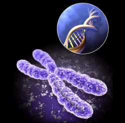 sperm genetic code chromosomes telomeres
