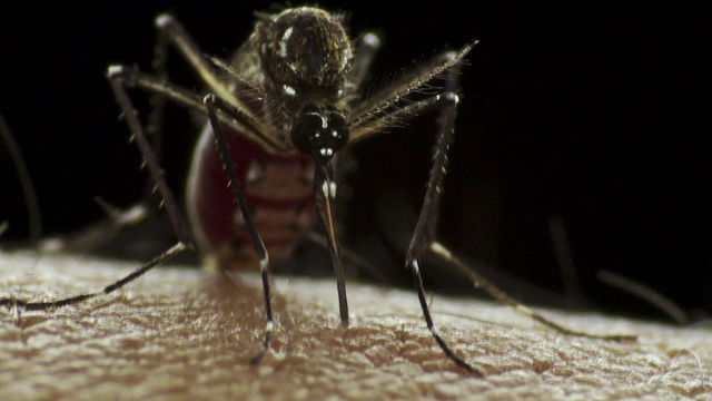 Zika Virus Test Approved for Use in the United States