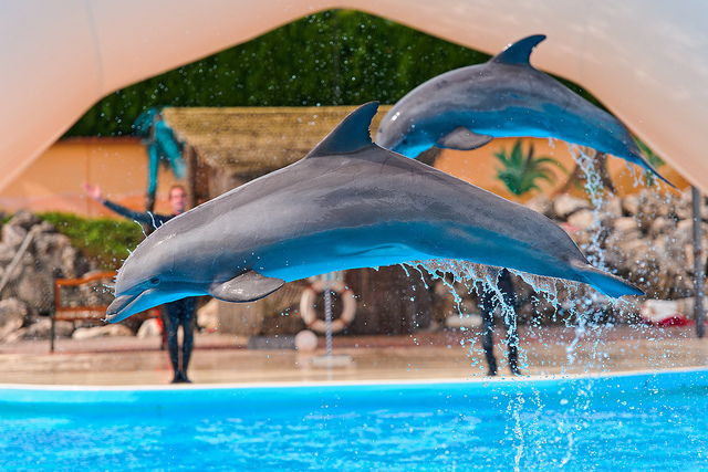 Dolphinaris Arizona Laying Off Workers and Temporarily Closing