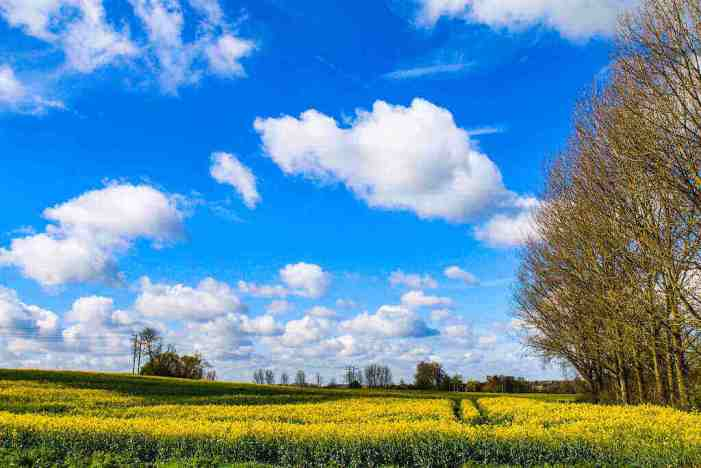 Farmland Is a Significant Collateral Source for Any Investment Portfolio