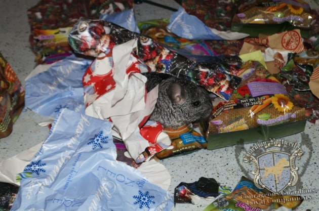 ChristmasMorning_2014_88