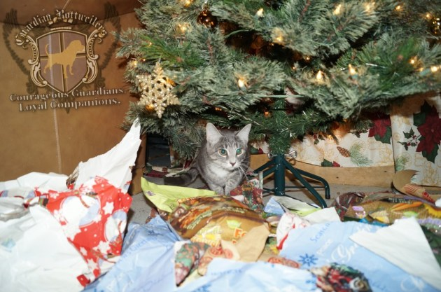ChristmasMorning_2014_92