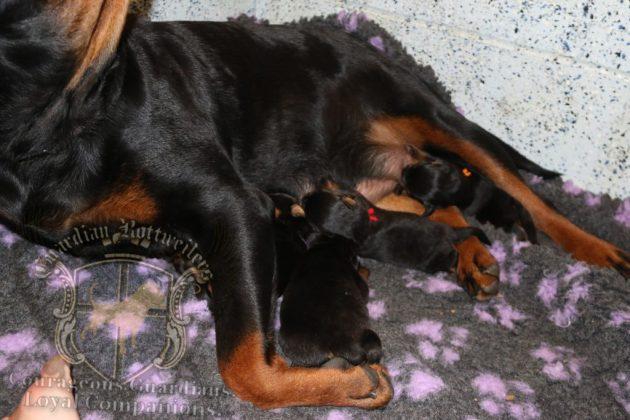 slitter_ultra_newborn_13