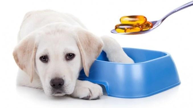 Suplementación nutricional para mascotas: OMEGA 3