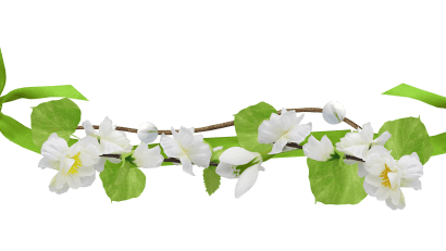white_flowers