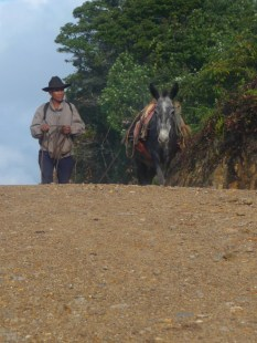 man and his horse