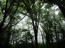 cloud forest Mombacho