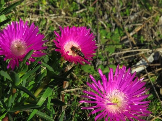 Guazu_flores