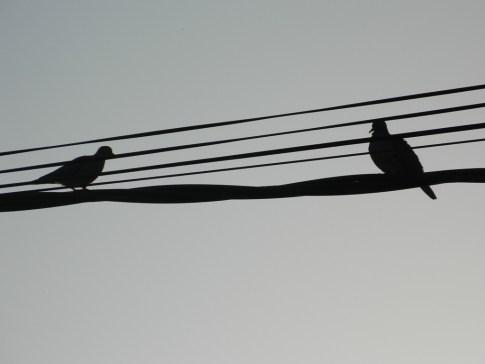 Pájaros 2 - Fotos de Matías