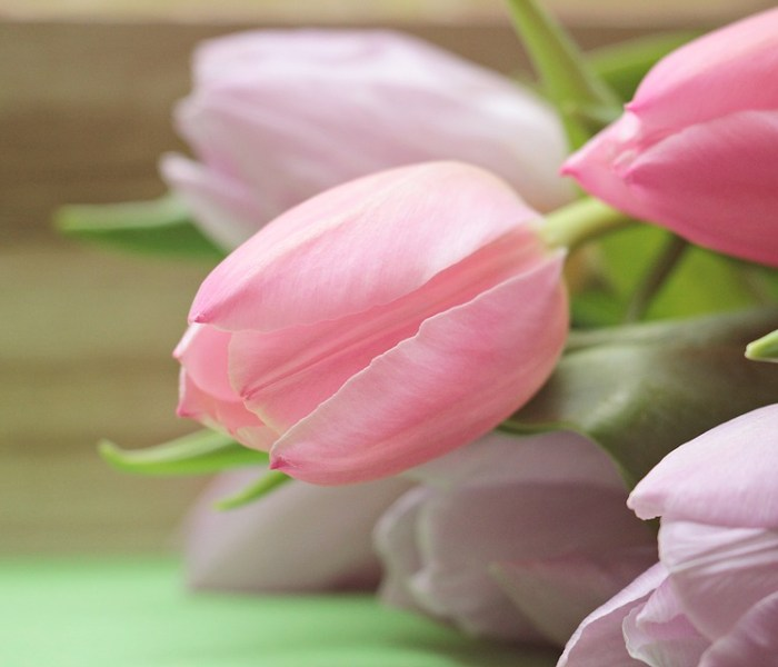 tulips-2167642_960_720
