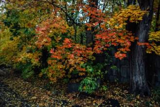 осенние деревья петрозаводск фото