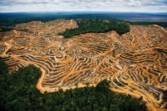 Вырубка лесов под пальмовые плантации
