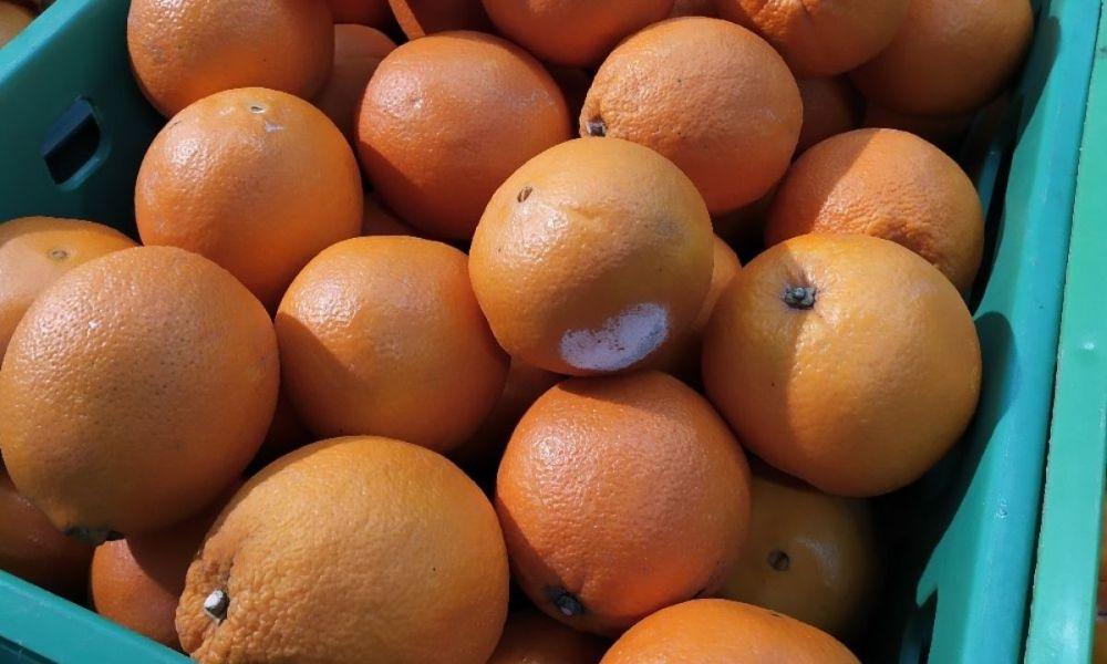 гнилые мандарины