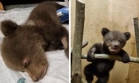 спасенные медвежата