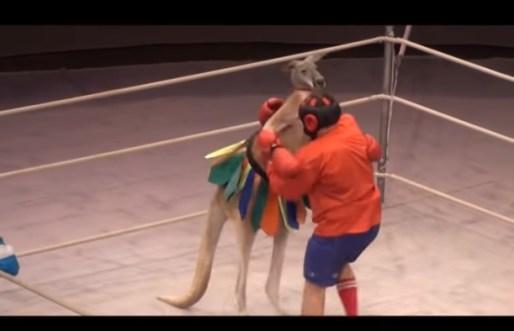 цирк, представление, ринг