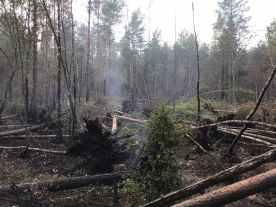 «Горит лес, деревья падают»: волонтеры рассказали о реальной ситуации на Сямозеро