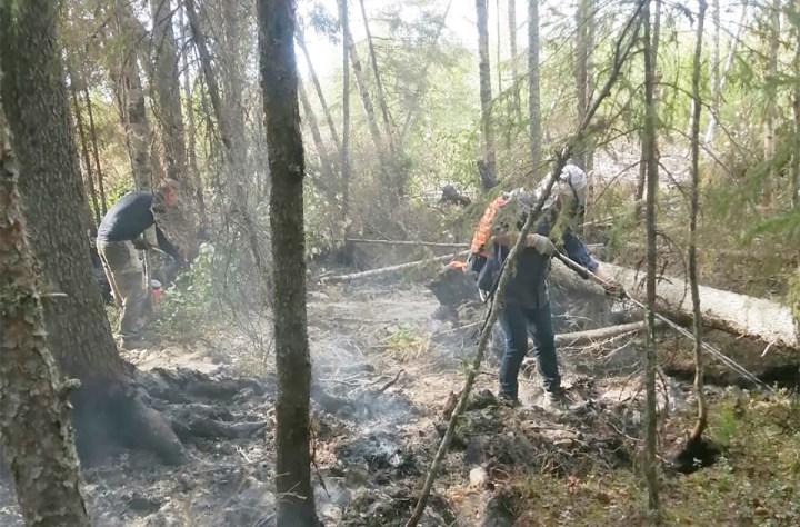 Волонтеры работают в лесу на пожаре