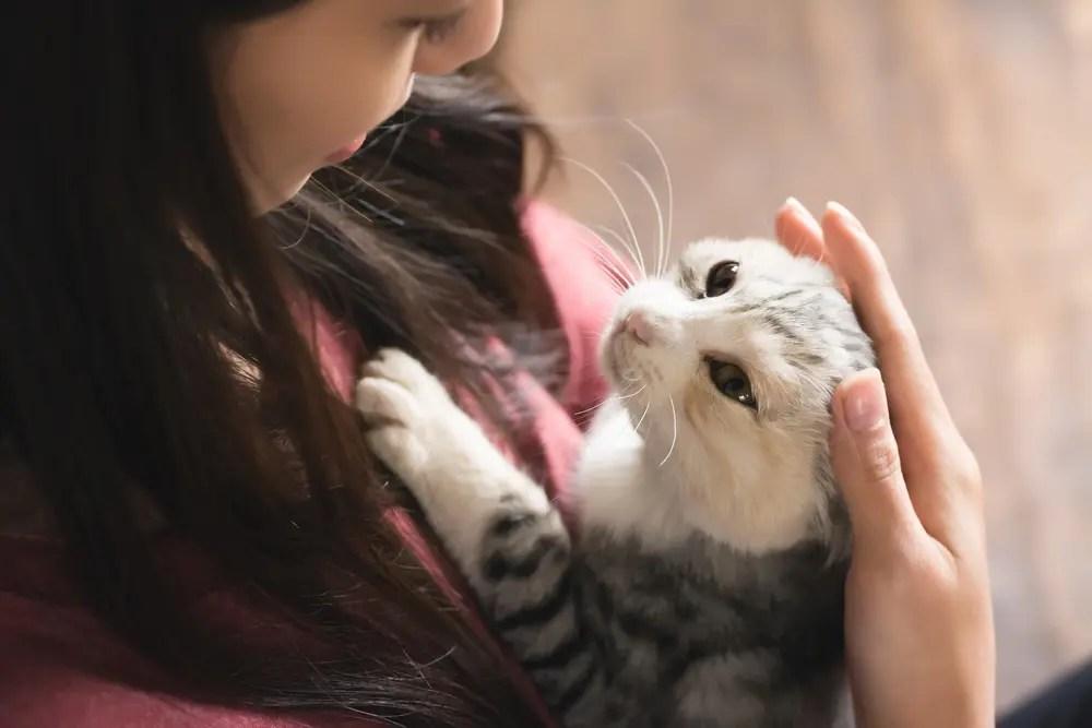 動物(猫)に癒やされる女性