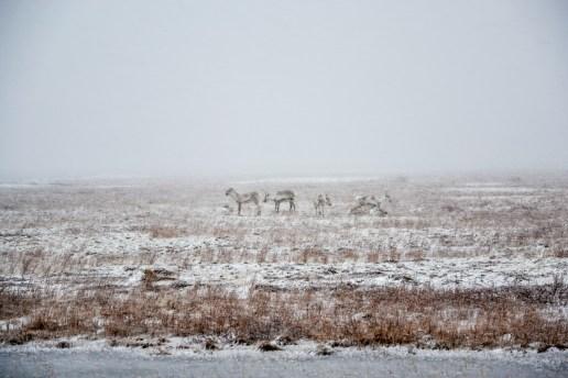 Quel giorno il tempo era proprio brutto, tranne che per le renne