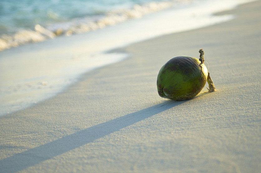 Alzheimer : il est temps de secouer le cocotier