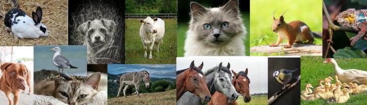 guerison animaux