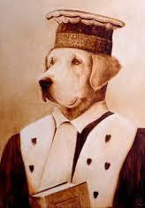 chien juge 7
