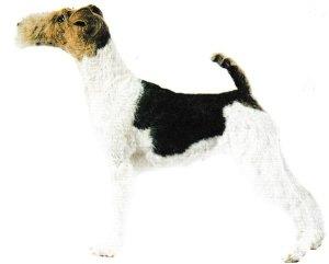 Jacques magnétiseur animaux en Corrèze