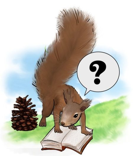 Squirrel asking a question