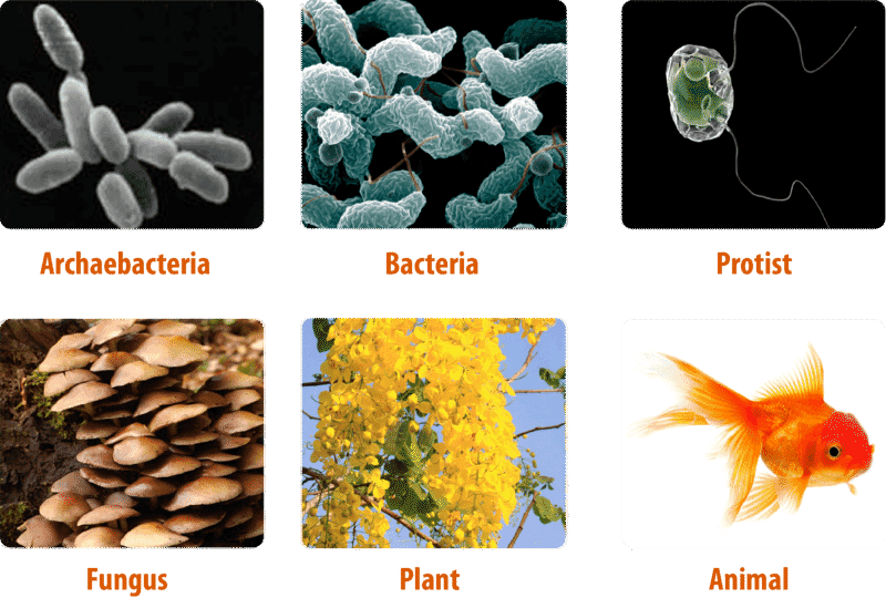 Diversity of life from Archaebacteria to Plants and Animals