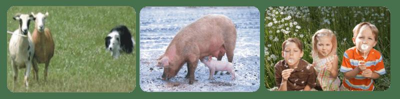 Examples of Animal Behavior