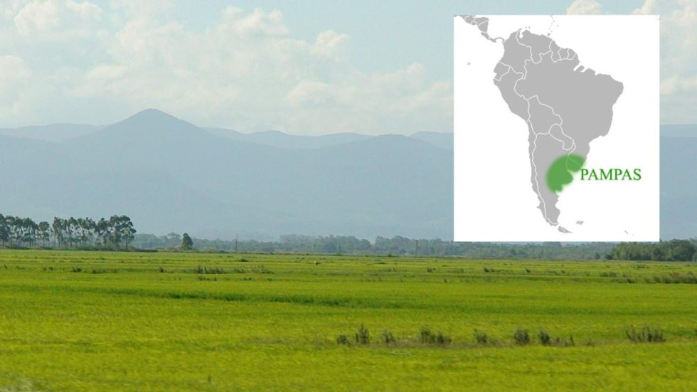 """The Pampas (from the Quechua: pampa, meaning """"plain"""") are fertile South American lowlands."""