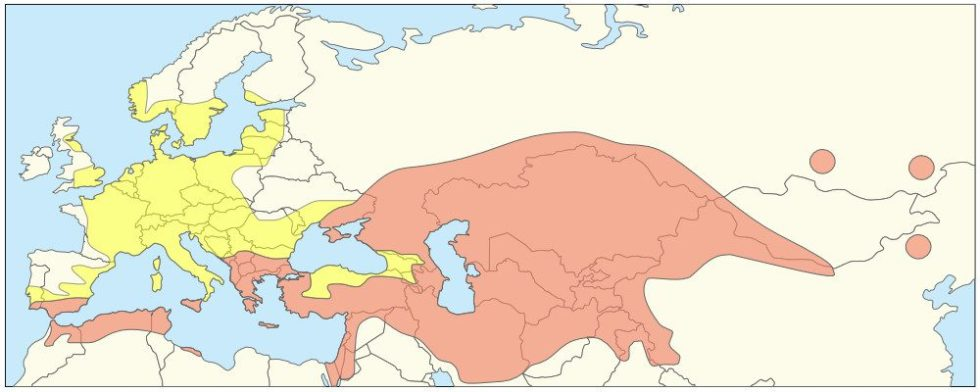 This map shows where tulips are from naturally (red) and where they were introduced (yellow).