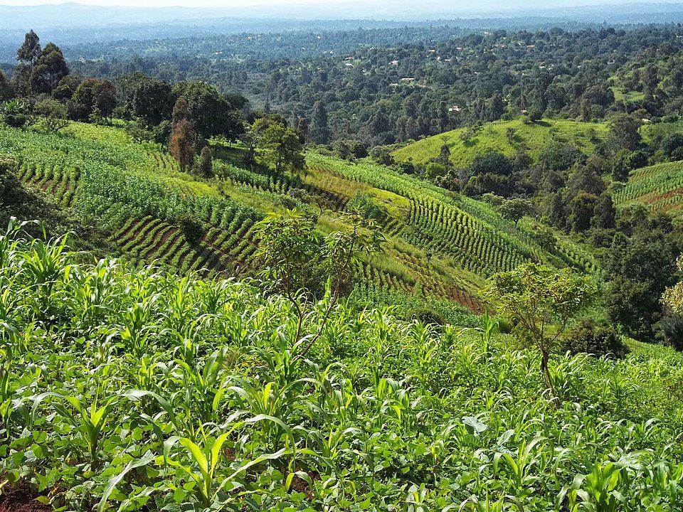 Bamenda grassfields in Cameroon