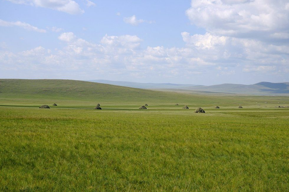 The steppe is a vast grassland.
