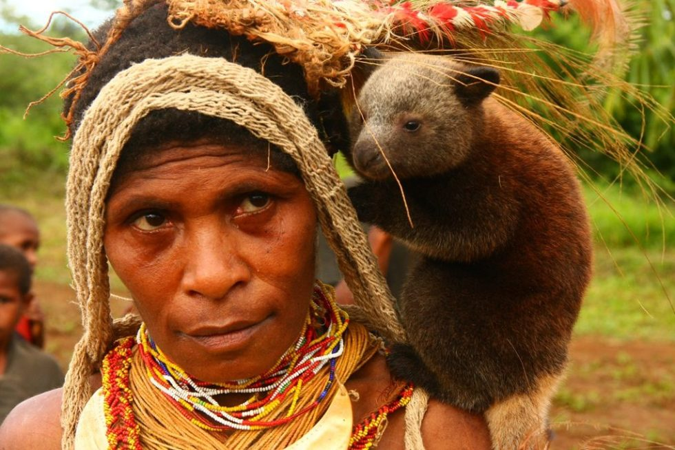 Baby tree kangaroo on the chief's wife's shoulder in Papua New Guinea
